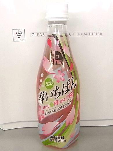 春いちばん 味わう梅、香る桜.jpg